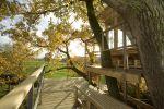 Дерево на террасе
