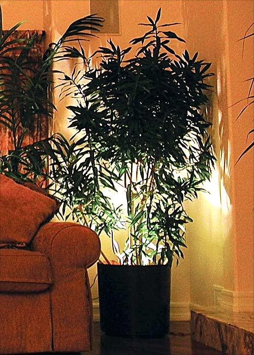 Освещение растений в нейтральном интерьере