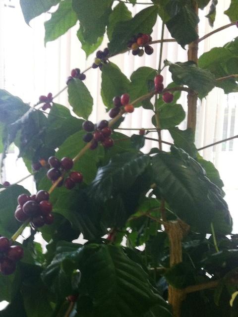 Растения в оранжерее