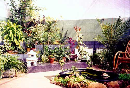 Экзотические растения в Зимнем саду
