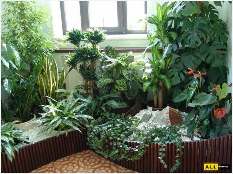 Зимний сад Брюллова 2