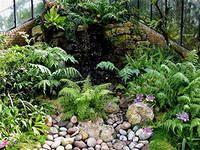 Зимний сад в доме Г. А. Боссе