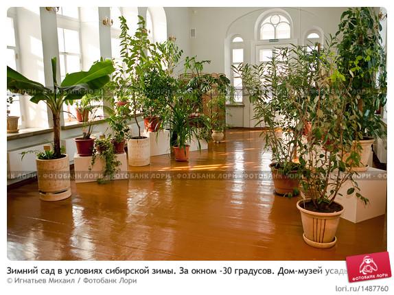 Зимний сад во дворце великого князя Владимира Александровича