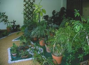 Зимний сад в московском доме князя Щербатова
