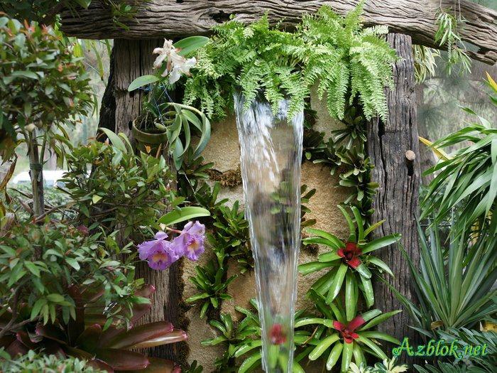 Тропические растения в зимнем саду