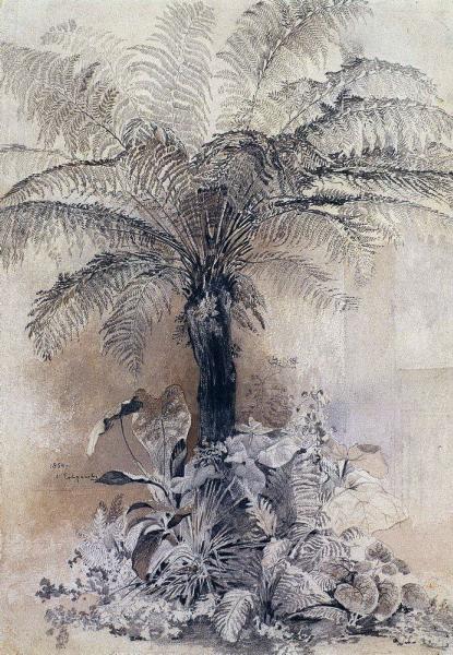 Полотно А. К. Саврасова - Тропические растения. Древовидный папоротник