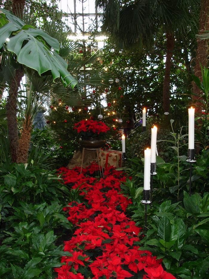 Зимний сад выставочного павильона