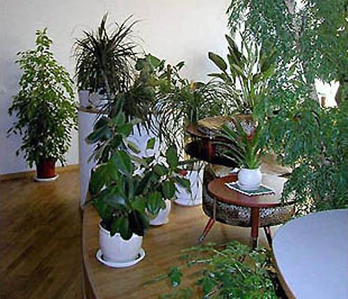 Оранжерейный сад в подмосковной усадьбе Мураново