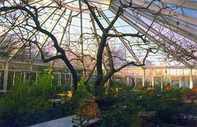 Зимний сад под стеклянным сводом