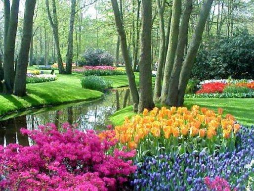 Садоводство в Голландии