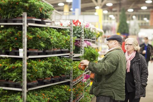 Специальная оранжерея для продажи растений