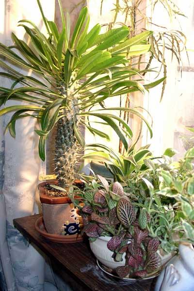 Растения на подоконнике 2