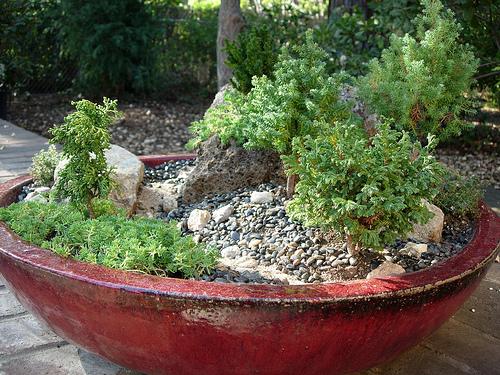 Театр растений