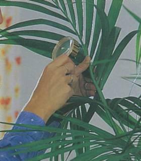 Уход за экзотическим растением