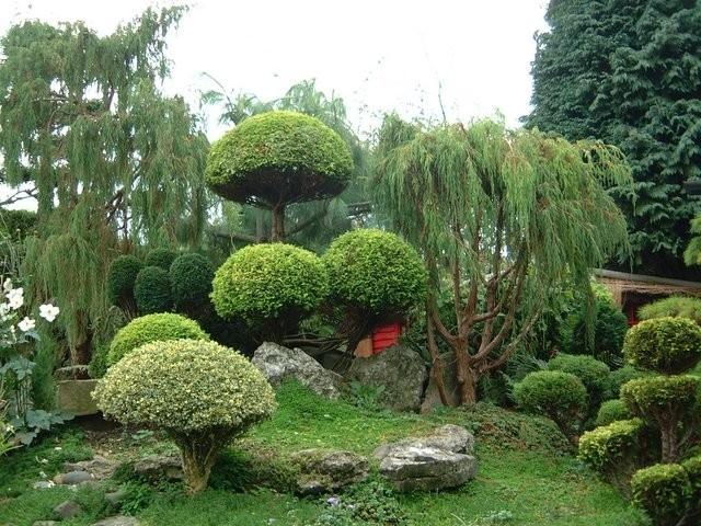 Сад династии Мин