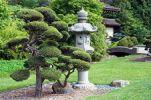 Китайский сад 5