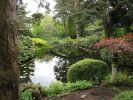 Восточный сад 2