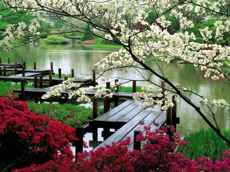 Восточные сады в России: такие важные «детали». О приемах, используемых при работе с растениями в китайском личном саду.