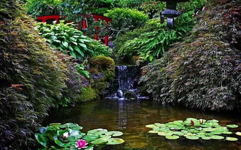 Восточные сады в России: Его Величество Пруд. Приемы создания формы пруда, функции водоема в Китайском личном саду.