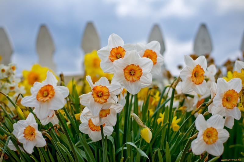 Цветы на заборе – красивое дополнение каждому дому