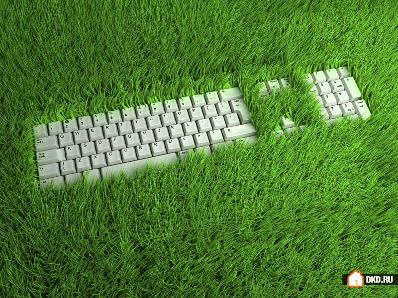 Как превратить Ваш офис в зеленый оазис