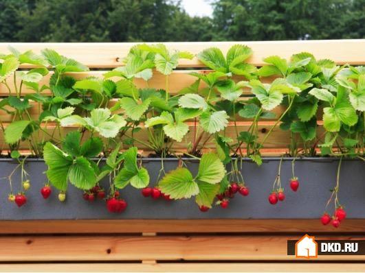 21 Дизайнерская идея маленьких садов